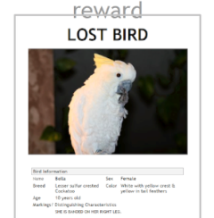 lost bird sign