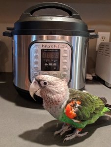 Parrot near an Instant Pot