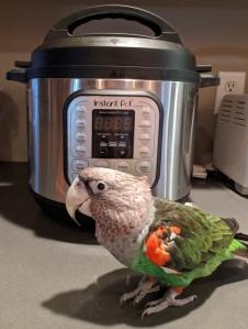 Parrot near an Instant Pot