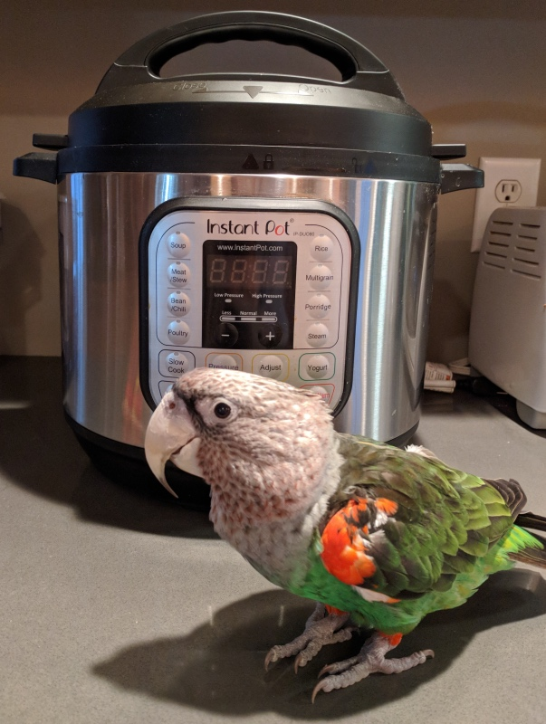 Are Instant Pots safe to use in homes with parrots? A volunteer wrote the company to findout