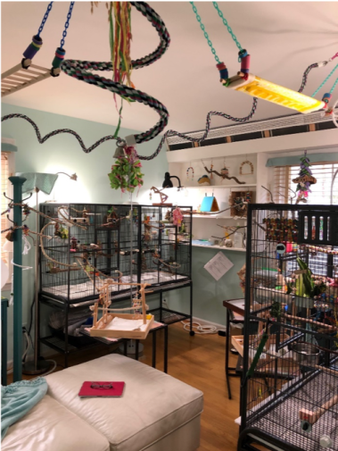 Parakeet room with hanging ladders and perches visible